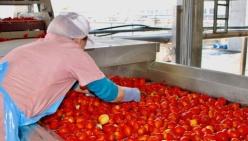 Raggiunto accordo d'area del pomodoro da industria del nord italia