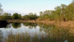 Pianificazione di distretto e conservazione della biodiversità: sinergie per un futuro sostenibile del fiume PO