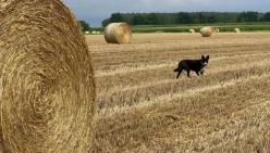 Agriturismi e fattorie didattiche: approvata la legge da 24 milioni di euro