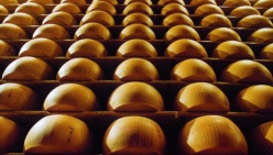 AGEA: appalto per fornitura Parmigiano Reggiano per indigenti