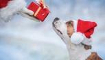 Cani, scegliere i migliori regali per natale
