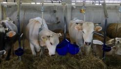 Agricoltura: la zootecnia da latte protagonista del piano nazionale di ripresa e resilienza