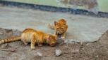 Corso di allattamento per gattini al via a Parma