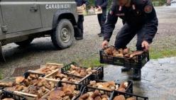 Funghi e controlli. I consigli e le raccomandazioni dei carabinieri forestali