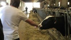 Agricoltura, Cadeddu (M5S): via ai 94 milioni di euro in sostegno dell'allevamento italiano