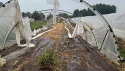 Agricoltura devastata da vento e grandine