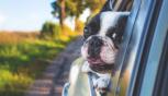 Attenzione ai colpi di calore degli animali domestici