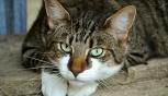 Parma: posti esauriti al gattile