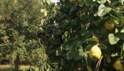 """Agricoltura, Marzana (m5s): """"il catasto frutticolo sarà presto realtà. A disposizione 5 milioni di euro"""""""